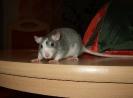 Stinki † am 22.04.2011